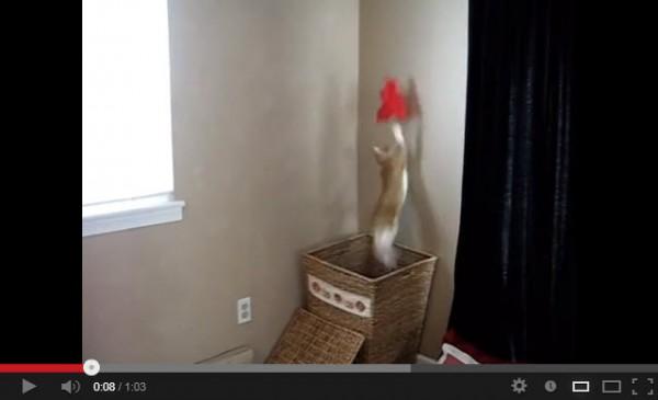 130902laundrycat 600x365 - ランドリーボックスに潜む猫、若島津君ばりのジャンプで好セーブを連発(動画)