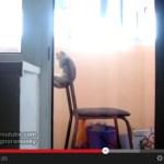 落ちそうで落ちない、鉄棒を練習する猫(動画)