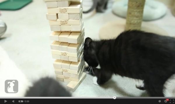 130918.jengacatjpg 600x358 - Jengaで遊ぶ猫、見事にピースを抜く