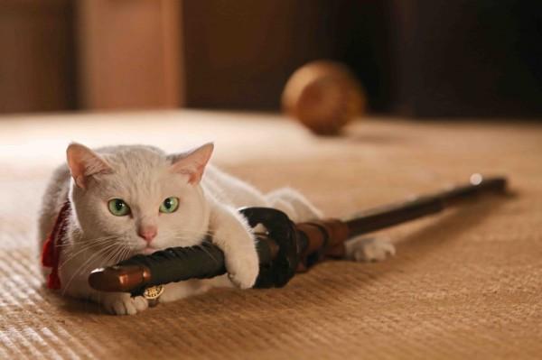 130920nekozamurai 02 600x399 - 北村一輝×猫のドラマと映画『猫侍』。ドラマは10月スタート、映画は来春公開