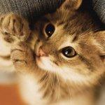 本日の美人猫vol.36