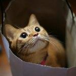 本日の美人猫vol.38