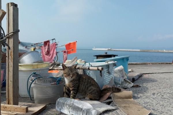 131102cat03 600x397 - 日本の「猫島」探訪:石巻市・田代島