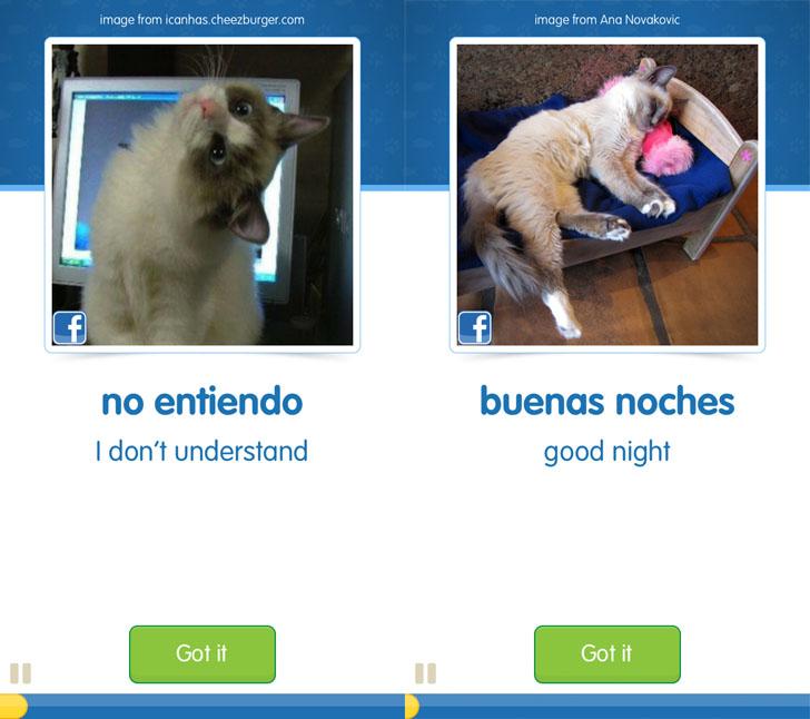 131129noentiendo - 猫写真で外国語を習得するアプリ『CatAcademy』。まずは英語&スペイン語版で