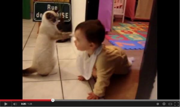 131204nekodamashi 600x357 - 猫による「猫だまし」が観測される(動画)
