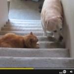 フォースを持つ猫達、犬の通り道に結界を張る