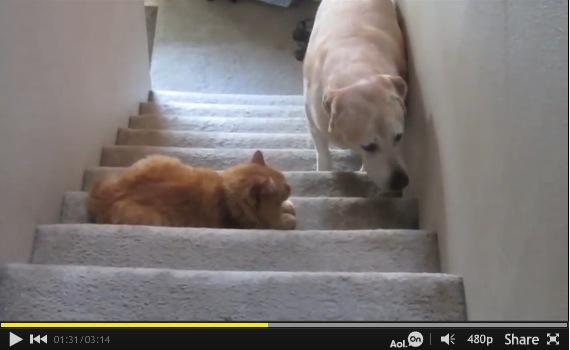 131208catanddog - フォースを持つ猫達、犬の通り道に結界を張る