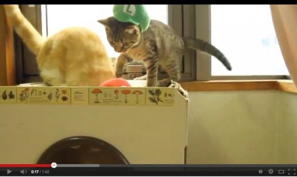 131209mariocat 600x358 - ルイージ猫、マリオ猫を穴に突き落とす(動画)