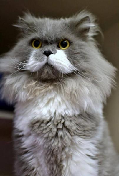 131214owlbert 404x600 - 「王様ヒゲ」を持つ猫vol.12