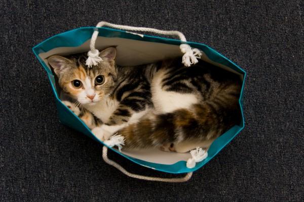 131215catinbag 600x400 - 本日の美人猫vol.52
