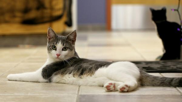 140102cat 600x337 - 本日の美人猫vol.55