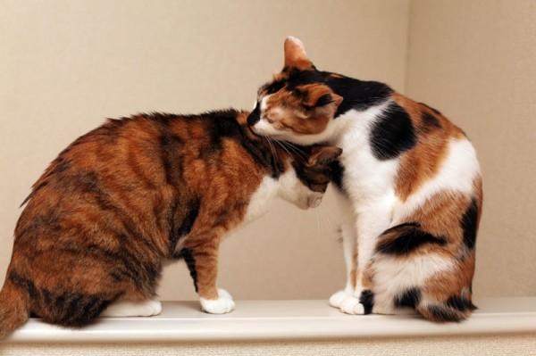 140111catinsurance 600x399 - 猫の医療保険を選ぶ基準の一考察