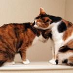 猫の医療保険を選ぶ基準の一考察