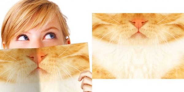 140114catbook 600x300 - 一瞬で、誰でも猫になれるノート