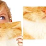 一瞬で、誰でも猫になれるノート