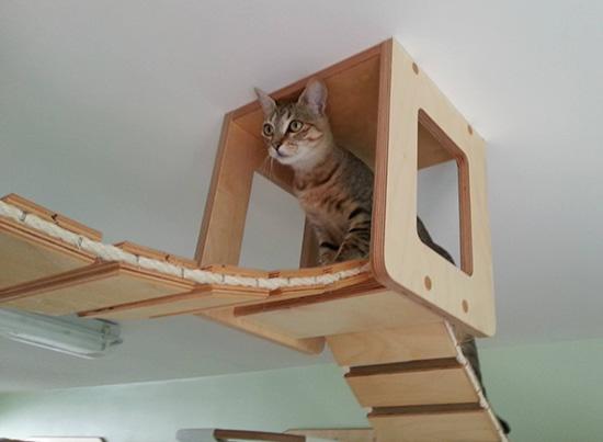 140115catathletic02 - ドイツの猫アスレチックハウスの、本気度がすごい