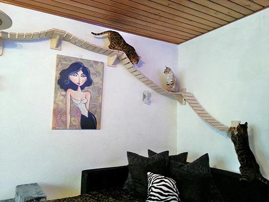 140115catathletic03 - ドイツの猫アスレチックハウスの、本気度がすごい