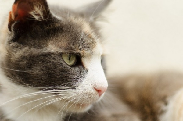 140126 photoac 600x397 - 無料で商用利用可能な、猫写真素材提供サイトまとめ