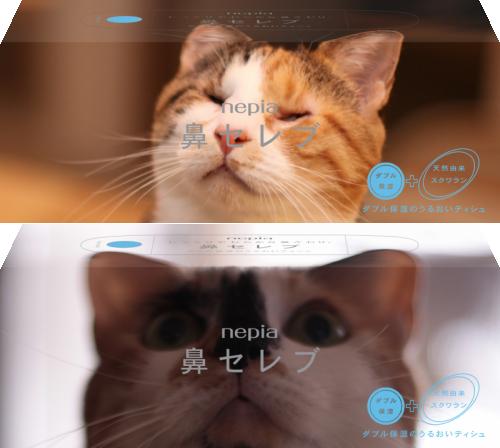 140129hanacelebrity - 猫パッケージ画像がやたらと似合う、「プチMy鼻セレブ」