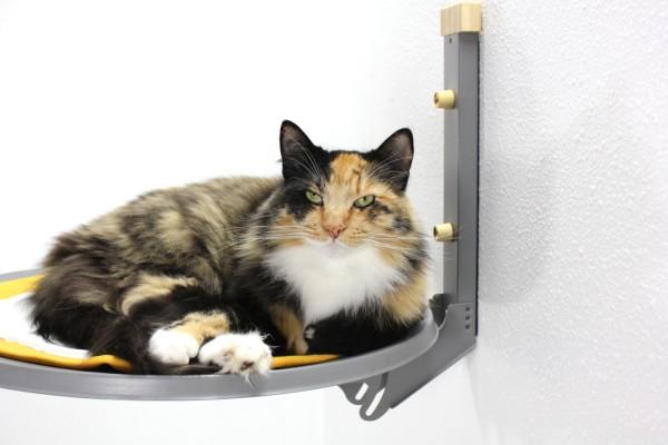 130217catbed02 600x400 - 猫が空中に浮いて見える、デザイン猫ベッド