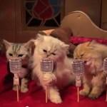 使い捨て猫トイレ定期宅配サービス「Poopy Cat」