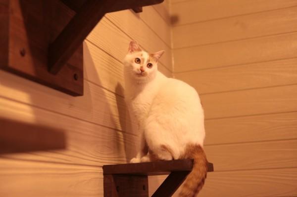 140301necoRepublicIMG 1376 600x399 - 岐阜の猫カフェで始まる、ビジネスと猫保護活動の素敵な関係