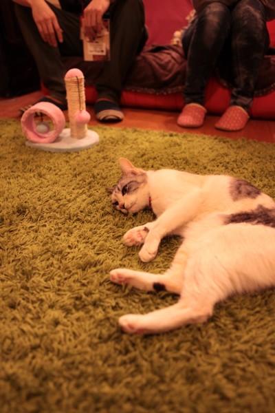 140301necoRepublicIMG 1378 400x600 - 岐阜の猫カフェで始まる、ビジネスと猫保護活動の素敵な関係