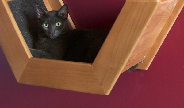 140329HabiCatModernPerch02 600x351 - 上下で猫が遊べる、ハニカムフォルムの壁掛け猫ベッド