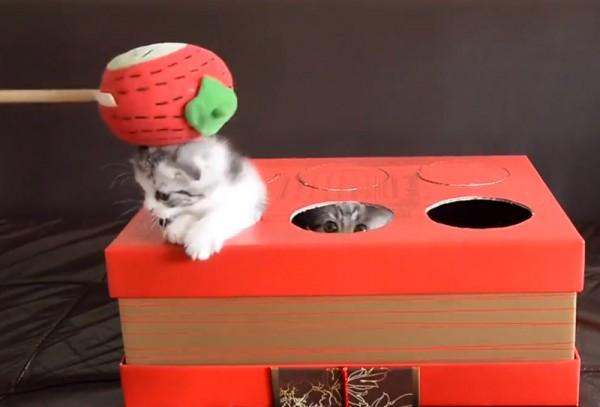 140416catgame 600x407 - 無邪気な子猫のモグラ叩き、ハンマーを下ろす手は自然とゆっくりに