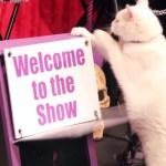 猫のサーカス団、興業中もやっぱり行動はマイペース