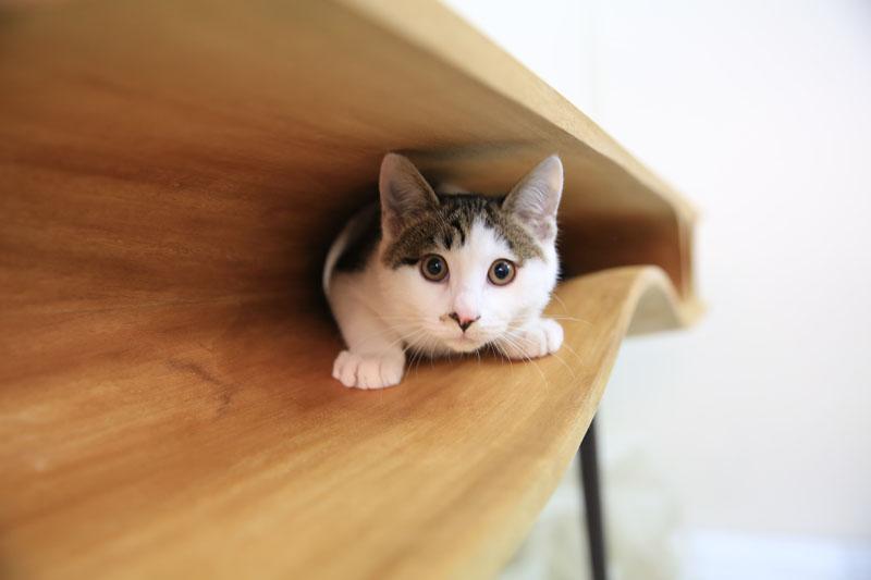 140422cattable01 - 猫と共に暮らすダイニングテーブルを、デザインするとこうなる