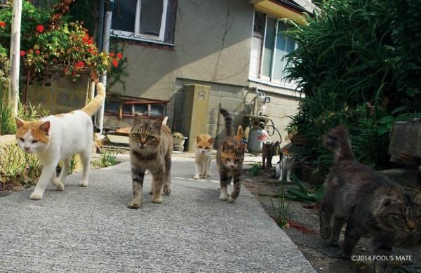 140424nekoshima04 600x389 - 愛媛の猫島「青島」写真集、収益の一部は猫島の環境整備に