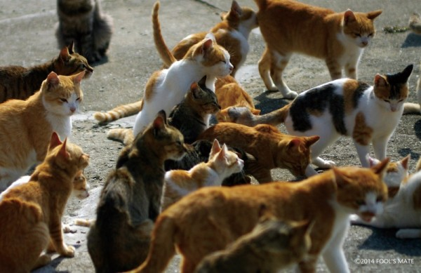 140424nekoshima09 600x389 - 愛媛の猫島「青島」写真集、収益の一部は猫島の環境整備に