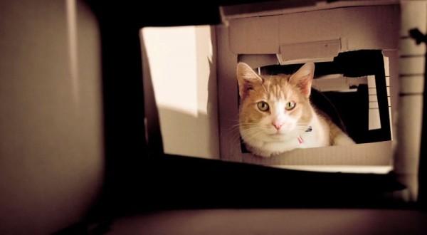 140427catbox04 600x330 - 段ボール猫タワーのメイキング、猫の満足度が伝わる動画に