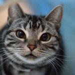 本日の美人猫vol.79