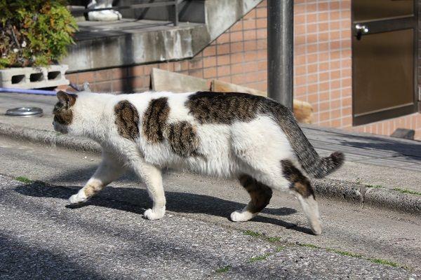 140523yanesencat03 - 谷根千の猫をひたすら撮り続けるブログ