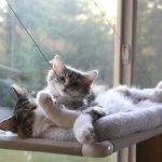 吸盤で窓に付けられる猫ベッド「Cat Perch」