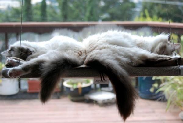 140525catperch02 600x402 - 吸盤で窓に付けられる猫ベッド「Cat Perch」