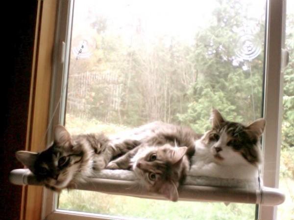 140525catperch03 600x450 - 吸盤で窓に付けられる猫ベッド「Cat Perch」
