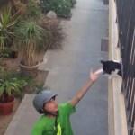 通路に寝そべる猫、少年のハイタッチに見事応える