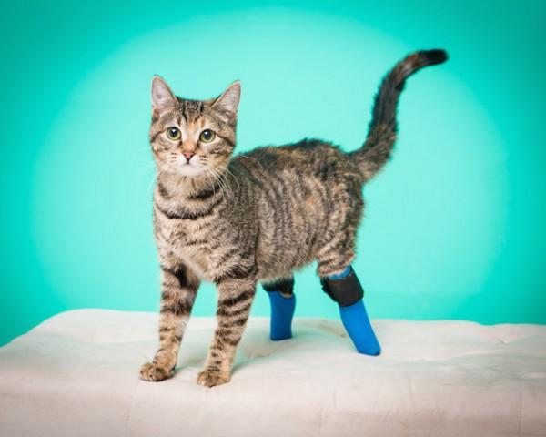 140605Boots 600x480 - 義足の後脚で暮らす猫、階段を華麗な逆立ち歩きで下りる
