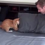 「ベッドシーツは最強の猫おもちゃ」説を、強力に裏付ける動画