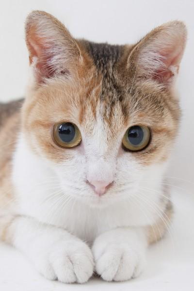 140617cat 400x600 - 本日の美人猫vol.85
