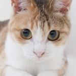 本日の美人猫vol.85