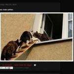淡々と猫用階段だけを紹介し続けるブログ