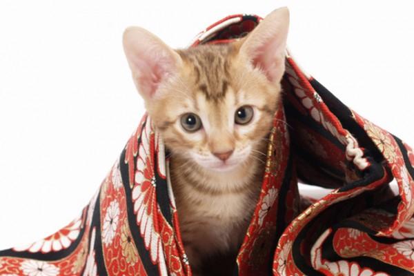 140726cathistory 600x400 - 猫の日本史:「猫」の初出史料は何か