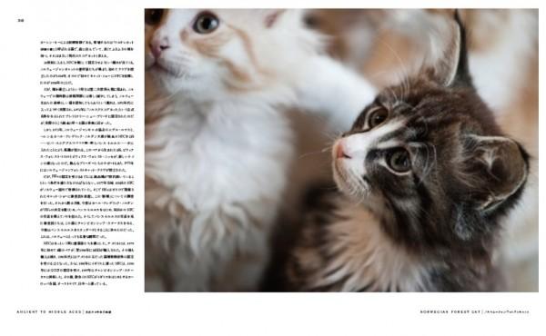 140803cat01 600x370 - 猫種の歴史を紐解く物語を綴る、『世界で一番美しい猫の図鑑』