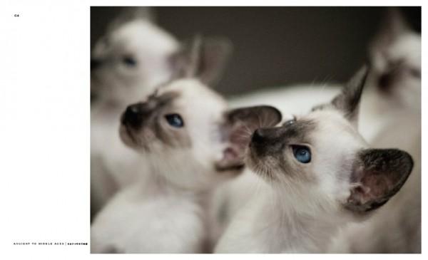 140803cat02 600x365 - 猫種の歴史を紐解く物語を綴る、『世界で一番美しい猫の図鑑』