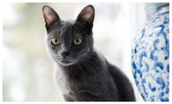 140803cat03 600x364 - 猫種の歴史を紐解く物語を綴る、『世界で一番美しい猫の図鑑』