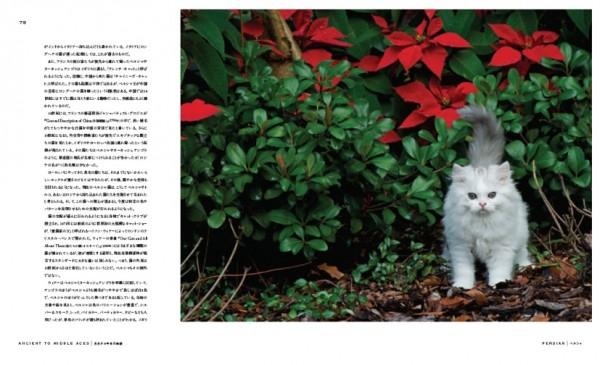 140803cat04 600x365 - 猫種の歴史を紐解く物語を綴る、『世界で一番美しい猫の図鑑』